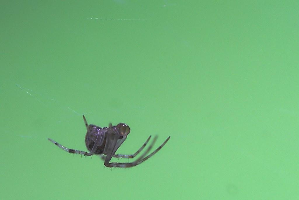Spider (Green)