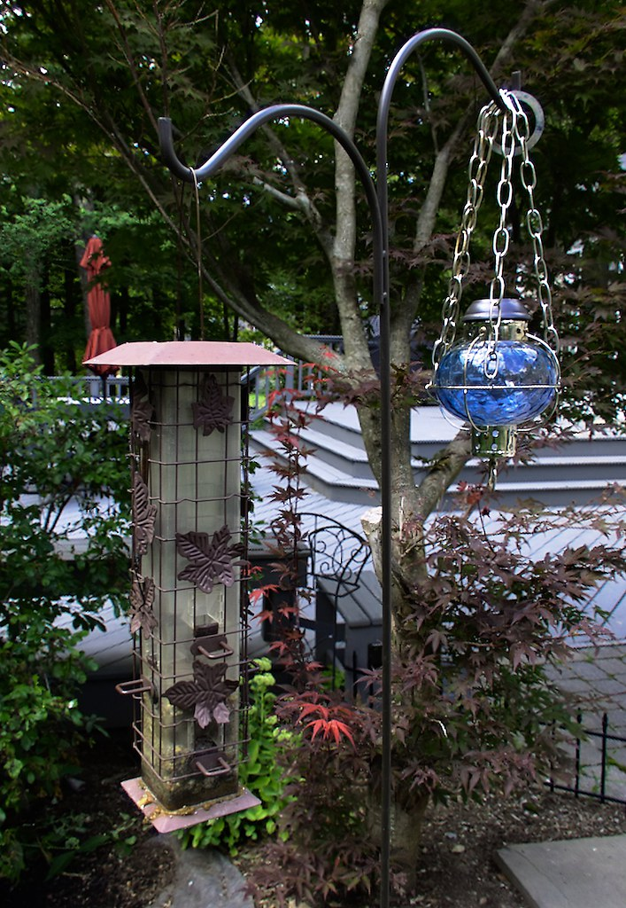 Bird Feeders (f/16.0; Lytro Illum)