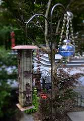 Bird Feeders (f/2.0; Lytro Illum)